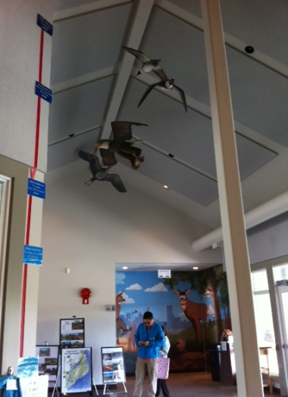 A diagram inside the nature centre at the Inglewood Bird Sanctuary illustrates how high the Bow River ran before it crested at midnight on June 21 -- 4.1 metres, up from about 2 metres at 9 a.m. on June 20.