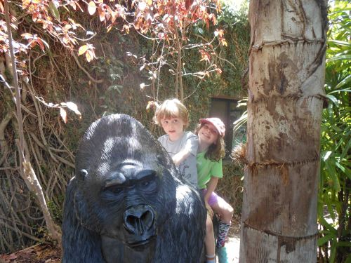 Aping around on a gorilla at the San Diego Zoo.