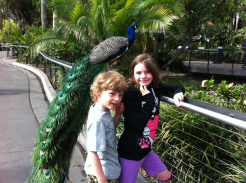 Bennett and Avery stand pretty and proud as peacocks to be at one of the world's best zoos.
