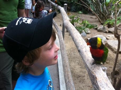 Bennett stares down a lorikeet.