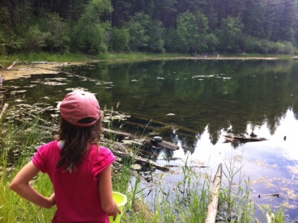 Avery surveys the scene looking for Western Painted turtles at Hidden Lake in Kikomun Creek Provincial Park.