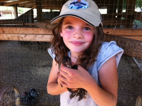 Avery hold a chick inside the coop at O'Keefe Ranch.