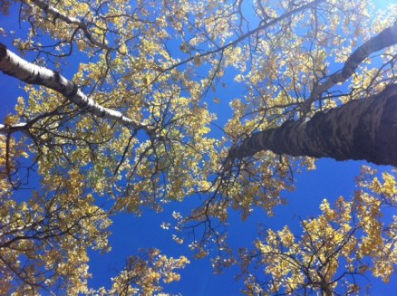 """Avery said, """"Wow, look up!"""" Gorgeous."""