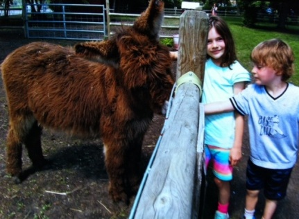 Avery and Bennett pet a furry donkey at Sunnybrook Farm.
