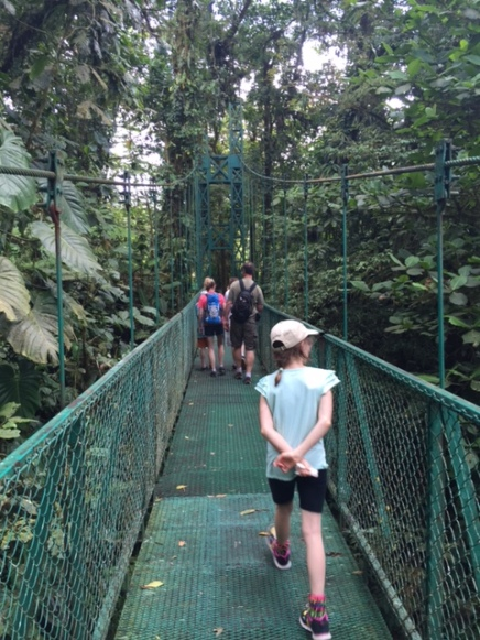 The hanging bridges hike lets us spot birds that surround us in the forest canopy.