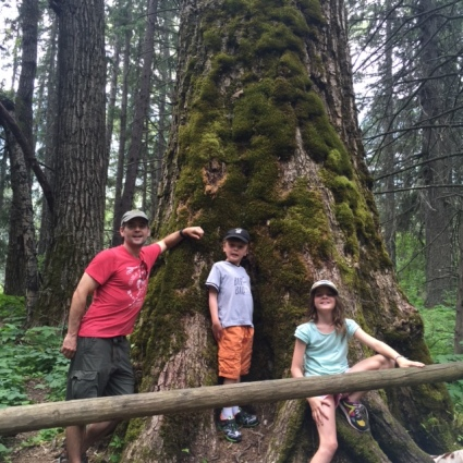 Blake, Bennett and Avery pose in front of the grove's oldest tree, estimated to be about 400 years old. Bennett is so small compared to the tree -- he fits comfortably in a trunk nook.