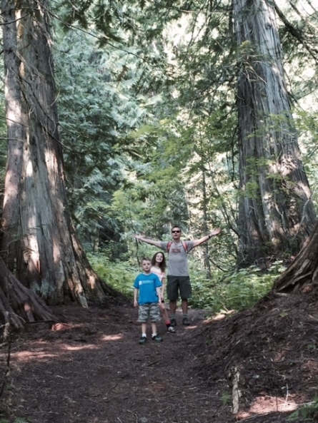 Tiny humans in a giant forest.