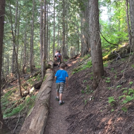 Bennett hikes up the shady Old Growth Trail to Island Lake Lodge.