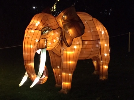 Colourful elephants add flair to Illuminasia at the Calgary Zoo.