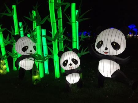 The pandas are the most popular lanterns at the Calgary Zoo's Illuminasia festival.