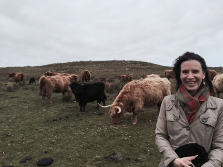 Hangin' with the hairy coos on Islay, Scotland.