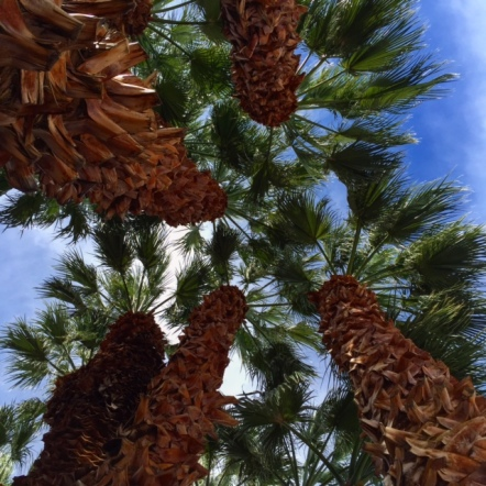 At least one memory of Palm Springs reflects its new reality: palm trees!