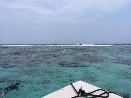 The sea life just offshore Ambergris Caye is incredible. Snorkellers