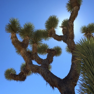 This is what a Joshua tree looks like. Cactus meets palm tree meets Lorax.